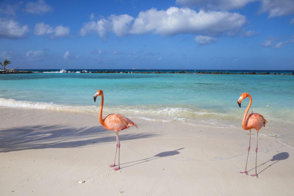 Aruba za 2038 zł w lutym!